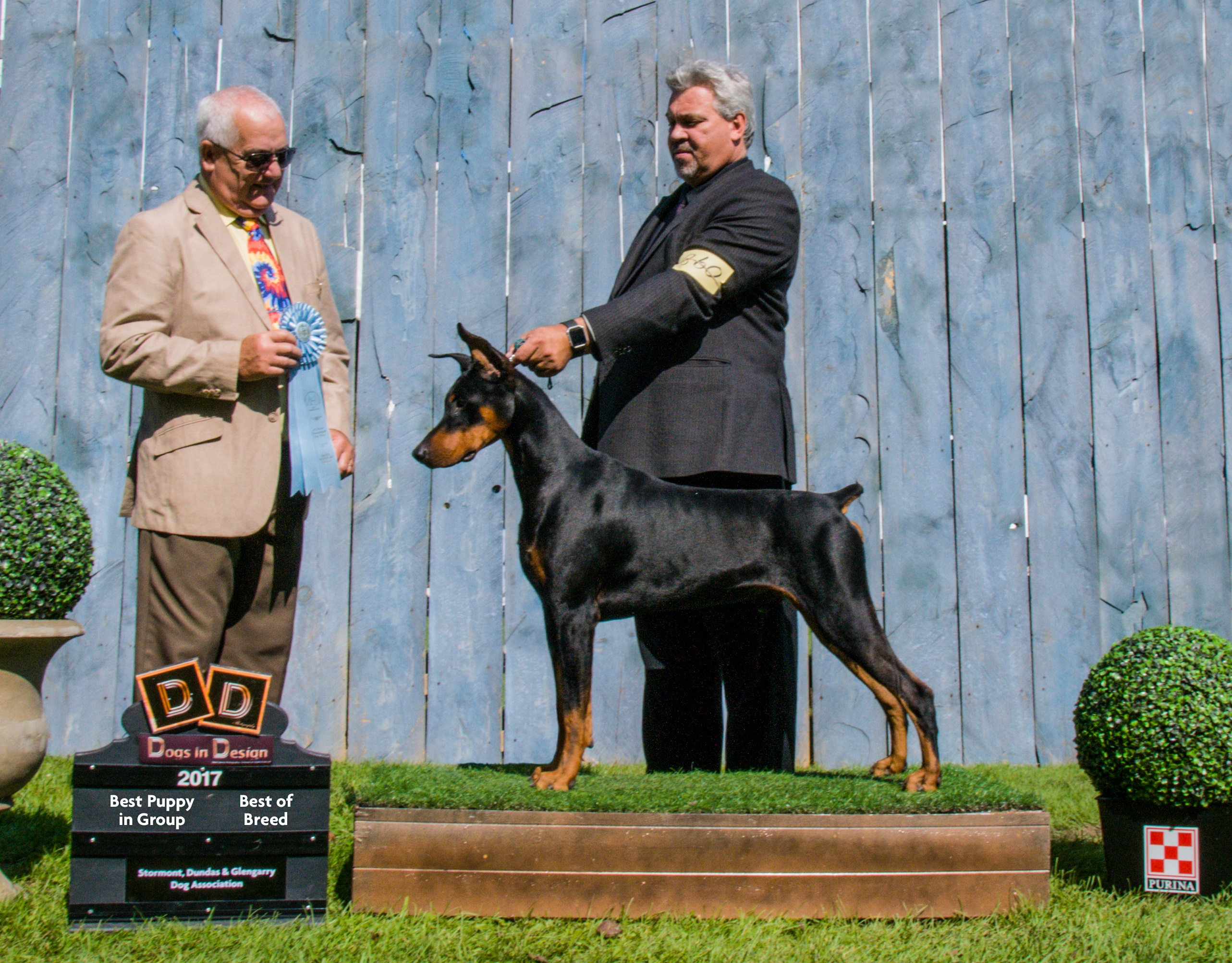Cash – Gatehouse Dobermans